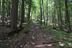 DSC_1913 (gregorv) Tags: slovenia slovenija kum planine mountains mountain nature narava