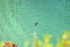 Point Lobos - China Cove (SyndromeDeStendhal) Tags: usa unitedstatesofamerica étatsunis amérique californie california bigsur seal sealion westcoast