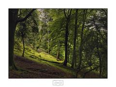 En el bosque V/ Into the woods V (Jose Antonio. 62) Tags: spain españa asturias forest bosque green verde naturaleza nature