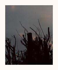 Il était une fois .. (hélène chantemerle) Tags: soir arbres branches ombres noir sombre evening trees shadows black darkness