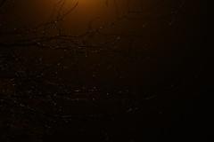 Below. (shadowlondoproject) Tags: below dark branches tree darkness luminescence glow rain raindrops