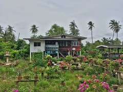 House with many flowers on Koh Kret island in the Chao Phraya river near Bangkok, Thailand (UweBKK (α 77 on )) Tags: chao phraya river koh kret pak island bangkok southeast asia iphone plants flora nature green flower house building