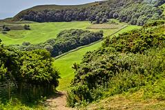 Swyre Head (Fr Paul Hackett) Tags: trees field hillside bush grass wooodland sky purbeck