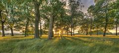 A beautiful place (cropped) (ArtGordon1) Tags: wansteadflats wanstead london england uk summer june 2018 davegordon davidgordon daveartgordon davidagordon daveagordon artgordon1 evening sunset