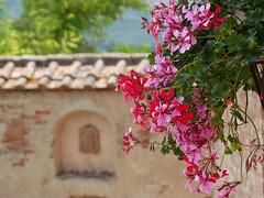 Estate in Toscana (Jolivillage) Tags: jolivillage village borgo pueblo certaldo toscane tuscany toscana fleurs fiori flowers géranium picturesque geotagged europe europa