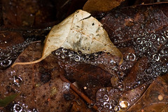IMG_0042 Under the Step (oldimageshoppe) Tags: leaves raindrops spiderwebs overcast openshade summer
