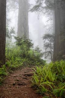 Foggy Ascent