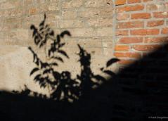 Dancing on the wall (frankdorgathen) Tags: minimalistic minimalism kaiserswerth düsseldorf silhouette licht light schatten shadow brick ziegel stein stone wand wall