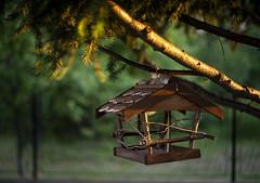 (agruszka212) Tags: bird feeder roof evening bokeh green pentax home