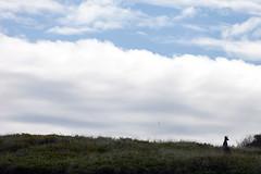 Roo in the dunes (Mikey Down Under) Tags: australia backbeach coast coffs dunes kangaroo northcoast northern nsw sand woolgoolga