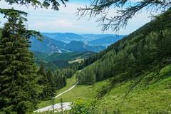 Walks on Zwoelferhorn-E7050087 (tony.rummery) Tags: austria em10 landscape mft meadows microfourthirds mountain omd olympus path stgilgen tree zwoelferhorn gemeindesanktgilgen salzburg at