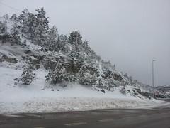 Nieve (Jony.Jemplar) Tags: nevado arbol blanco nieve cielo carretera