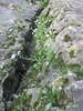 Flowers (terryhadalittlelamb) Tags: marblehead lighthouse lake erie flowers rocks ohio oh