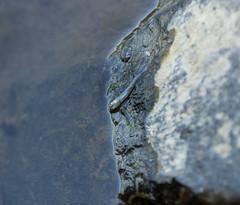 slip (jillian rain snyder) Tags: fish dead animal water death creepy slimy nature hike trees green oregon pnw salem