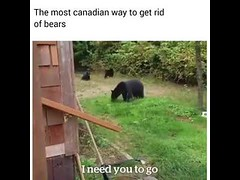 The Most Canadian Way To Get Rid Of Bears Meme 😂😅😱 (laughflash) Tags: ifttt youtube laugh flash