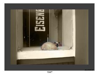 Shop window cat