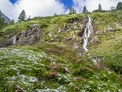 P6230040 (turbok) Tags: almrausch alpenpflanzen landschaft pflanze schnee schneeundeis wasser wasserfall wildpflanzen c kurt krimberger