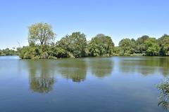 Bury Lake (James Mans) Tags: nikon d5500 rickmansworth aquadrome summer sun middlesex bury lake water duck ducks blue sky england trees landscape tree park river grass serene