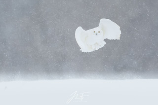 Le fantôme blanc