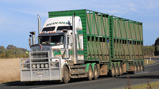 Livestock ~ Hume Fwy/Olympic Way (1/3)