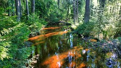 Forest Stream (timo_w2s) Tags: finland summer peltolammi tampere water river stream ditch forest firtrees