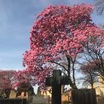 São Paulo Cemetery, Bairro Pinheiros, Brazil. thumbnail