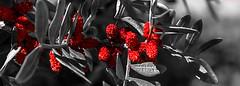 Flora salvatge !! (De carrusel) Tags: 2018 flores carrusel elpratdellobregat catalunya españa es