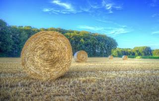 Harvest in progress