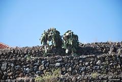 Піраміди в Гуїмар, Тенеріфе, Канари  InterNetri  028