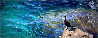 à l'ombre ou dans l'eau...