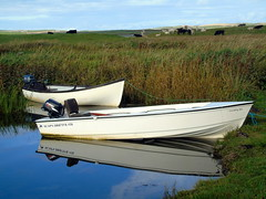 Boats (stuartcroy) Tags: orkney island beautiful boat reflection colour cow water