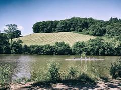 Training (ancientlives) Tags: longmarsh totnes devon england uk europe rowing riverdart sunshine bluesky nature landscape sunday july 2018 summer bench path boat