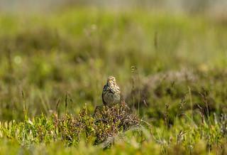 Wildlife around Magdalen June 2018 080