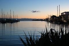Ahuriri Dawn (Karen Pincott) Tags: napier ahuriri dawn water sea boatharbour newzealand boats yachts flax sunrise