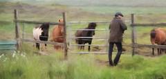 From Iceland. (Tóta. 27.12.1964.) Tags: animal horse people grass iceland ísland