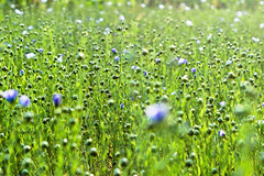 Meadow (Kapitalist63) Tags: nature field form farm color cluster flowers background green light look view scene grass land dacha camp square morning