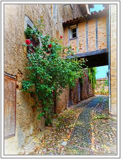Les rues de Figeac - Le rosier rouge