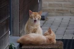 Almost Weekend! (Johan Moerbeek) Tags: cats lazy red cat kat lui slaperig frontdoor door garfield