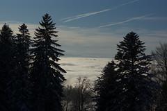 Forest above the Clouds (Bephep2010) Tags: 2017 77 alpha bäume landschaft sal50m28 slta77v schnee schweiz sony switzerland wald winter wolken zug zugerberg clouds forest landscape snow trees weiss white ch
