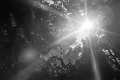 Untitled (agataurbaniak) Tags: rollei35 rollei35s rollei 35 s 35mm compact film analog analogue 40mm 40 sonnar f28 28 kodak tmax 400 400asa monochromatic monochrome blackandwhite negative plustekopticfilm120 plustek opticfilm 35mmfilm 135 135film