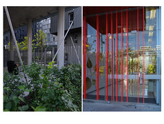 Foliage in and out (michelle@c) Tags: urban suburban cityscape building composition lines redfluo grey foliage exterior interior green golden incage parisxiii district bb92 2018 michellecourteau