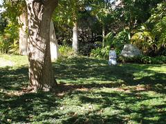 camellia gardens (AS500) Tags: camellia gardens park garden sydney green sutherland shire caringbah