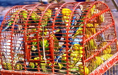Chinese birdcage (gerard eder) Tags: world travel reise viajes asia china guangzhou guangdong animals animales tiere birds birdcage outdoor street streetlife urban urbanlife urbanview streetmarket
