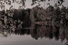 DSC06047rx100IV (jaaselin) Tags: finland suomi luonto finnishnature pirkkala pyhäjärvi lake summer sunset evening auringonlasku järvi koivu birch beach boats rowboats veneitä satama laituri blackandwhite mustavalkoinen pier photography colors
