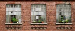 Stadtgärten (he-photogrphy) Tags: backsteinbau fenster blumentöpfe alteindustriekultur leipzig altebaumwollspinnerei