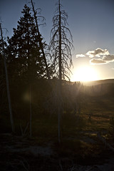 Sunset Over the Pines (dleany) Tags: 2470mmf28l 5dmkii sunset pines silhouettes