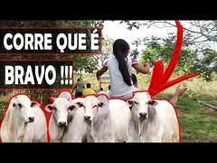 """Um """"PERIGOSO"""" PASSEIO na MATA DA ROÇA em Minas Gerais, Corgo de PESCARIA secou !!! PARTE 1 (portalminas) Tags: um perigoso passeio na mata da roça em minas gerais corgo de pescaria secou parte 1"""