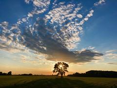 iph8085 (gzammarchi) Tags: italia paesaggio natura pianura campagna ravenna borgomontone tramonto albero nuvola riflesso