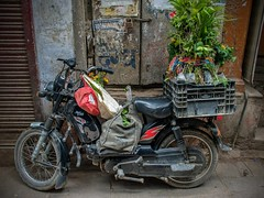 Utility Vehicle Varanasi (shapeshift) Tags: nikon d5600 transport transportation scooter delivery plants flowers davidpham davidphamsf alleyways alleys alley street streetphotography parkingpoetry motorcycleparking motorcycle shapeshift shapeshiftnet banaras benares kashi varanasi uttarpradesh india in