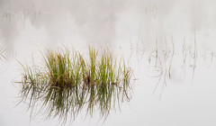 'Now and Zen' No. 2 (Canadapt) Tags: mist fog grass marsh water pond princerupert canadapt